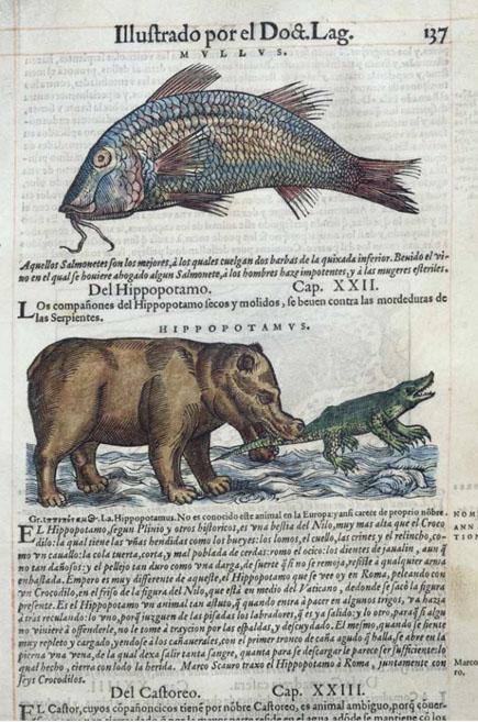 dioscorides_biblioluces